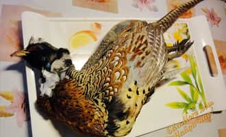 фазан фото, купить фазанов, фазан домашний, фазанный, фазаны +в домашних условиях