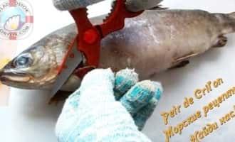 Как приготовить форель