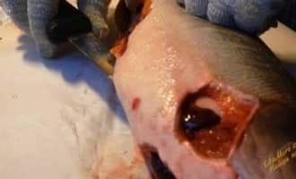 как разделать лосося, как разделать лосось на филе, как разделывать лосось видео