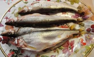 корюшка рыба, корюшка рыба википедия, рыба корюшка фото,  korjushka-ryba, korjushka ryba vikipedija, ryba-korjushka-foto