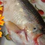 Корюшка рыба фото и видео