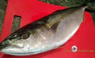 лакедра рыба фото