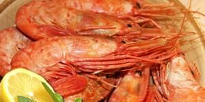 морские креветки, морская креветка, виды морских креветок