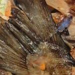 Кижуч рыба рецепты