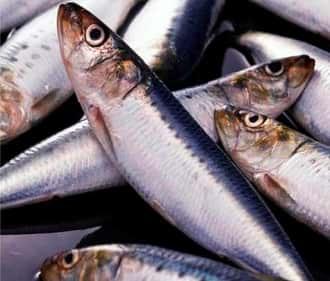 сардины тихоокеанские иваси, их любят вкусные кальмары
