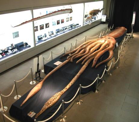 гиганский кальмар фото